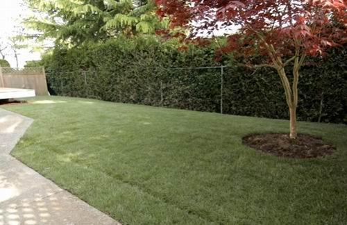 how long to water lawn